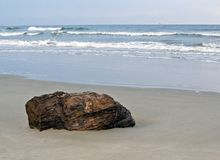 Driftwood. On the shore with the waves in the background at Sunset Beach, North Carolina Royalty Free Stock Image