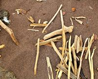 driftwood imagens de stock