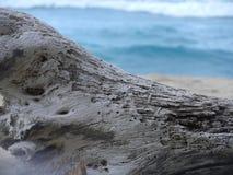 driftwood Arkivfoto