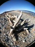 driftwood Foto de archivo libre de regalías
