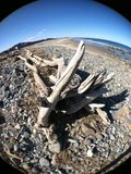 driftwood Foto de Stock Royalty Free