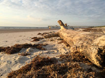 driftwood Royalty-vrije Stock Fotografie