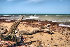 Driftwood. Lying on the beach Stock Photos