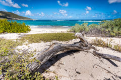 driftwood Immagini Stock Libere da Diritti