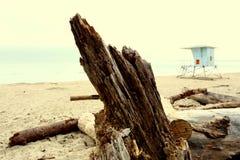 driftwood Стоковые Изображения RF