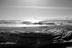 Driftwood Imagem de Stock