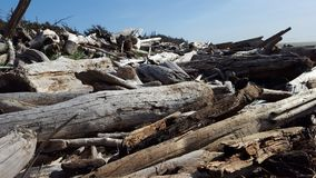 driftwood royaltyfria bilder