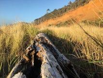 driftwood Fotografía de archivo