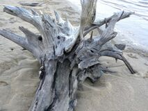 Driftwood Royalty Free Stock Images