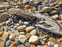 Driftwood fotografia de stock
