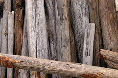 Driftwood. Pile Stock Photography