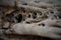 driftwood obrazy stock