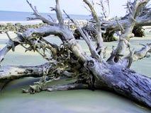 driftwood Foto de archivo