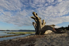 Driftwood against drifting sky Stock Photography