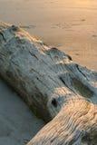 Driftwood al tramonto Fotografie Stock Libere da Diritti