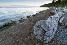 Seaside Ocean Pacific Landscape Sky Background. Driftwood along the beaches of the  seaside community of White Rock, BC, Canada Royalty Free Stock Photo