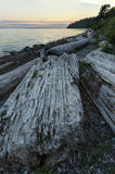 Seaside Ocean Pacific Landscape Sky Background. Driftwood along the beaches of the  seaside community of White Rock, BC, Canada Stock Photos