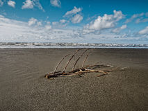 Driftwood Along The Coast Royalty Free Stock Image