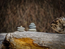 Driftwood Along The Coast Royalty Free Stock Photography