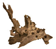 Driftwood for aquarium. Driftwood isolated in white background. Aquarium ornament stock photography