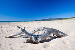 Driftwood on Australian beach Royalty Free Stock Photo