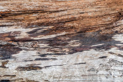 Driftwood Background Royalty Free Stock Photography