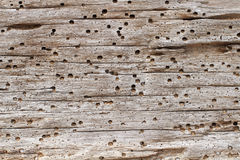 Driftwood background Stock Photos