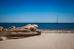 Driftwood in the Baltic Sea Royalty Free Stock Image