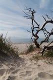 Driftwood at the baltic sea. Landschaft mit treibholz an der ostsee Royalty Free Stock Photo