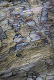 Driftwood Bark Texture at St Cyrus in Scotland. Stock Photos
