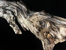 Driftwood barkentyny zakończenie up odizolowywający na czerni fotografia royalty free