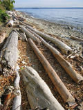 Driftwood On the Beach. Old driftwood on beach Royalty Free Stock Photography