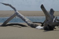 Driftwood on beach. Driftwood washed up on a beach in Mozambique, Africa Royalty Free Stock Images