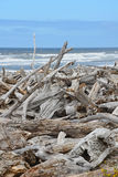 Driftwood on the beach Royalty Free Stock Image