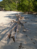 Driftwood on beach. Driftwood in the gulf of thailand Stock Image