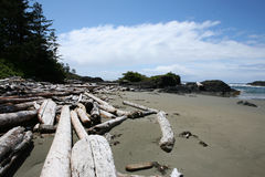 Driftwood beach Stock Photography