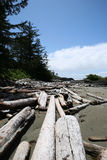 Driftwood on beach Stock Photos