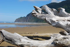 Driftwood on the Beach. Remnants of an old tree are lade to rest on the beach Royalty Free Stock Photos