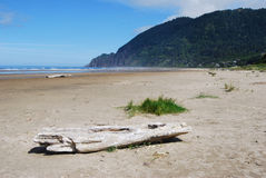 Driftwood on the Beach. With mountains in background Royalty Free Stock Photo