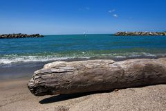 Driftwood on beach Royalty Free Stock Photography