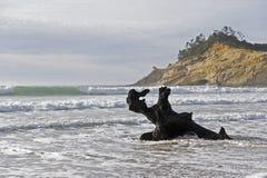 Driftwood on the beach Stock Photos