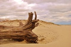 Driftwood at the beach Royalty Free Stock Photography