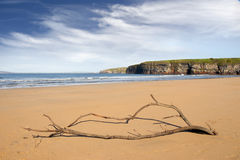 Driftwood on the beach at Ballybunion Stock Photos
