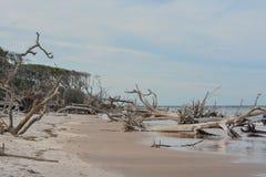 Driftwood Beach,Big Talbot Island State Park,Duval county,Atlantic Ocean,Florida.  royalty free stock photo