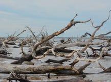 Driftwood Beach,Big Talbot Island State Park,Duval county,Atlantic Ocean,Florida.  royalty free stock photography