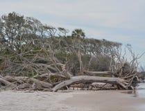 Driftwood Beach,Big Talbot Island State Park,Duval county,Atlantic Ocean,Florida.  stock image