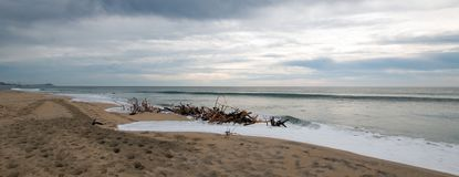 Driftwood beach bramble in San Jose Del Cabo in Baja California Mexico. BCS Stock Images