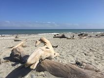 Driftwood on beach. Clear day Stock Image