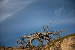 Driftwood on beach Stock Images