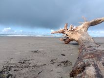 Driftwood on the beach stock photography